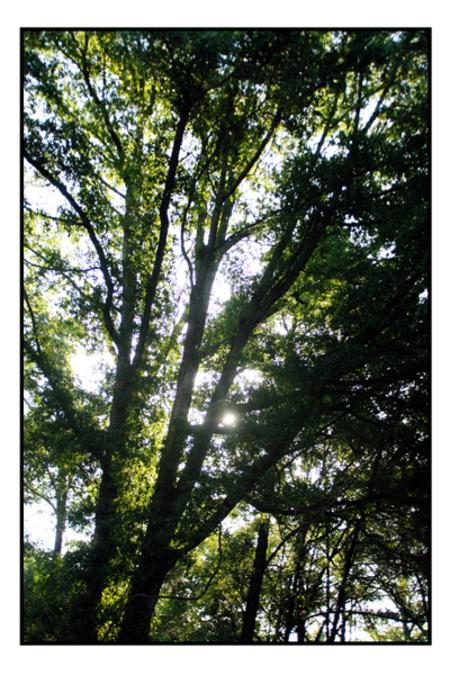 Treesblog